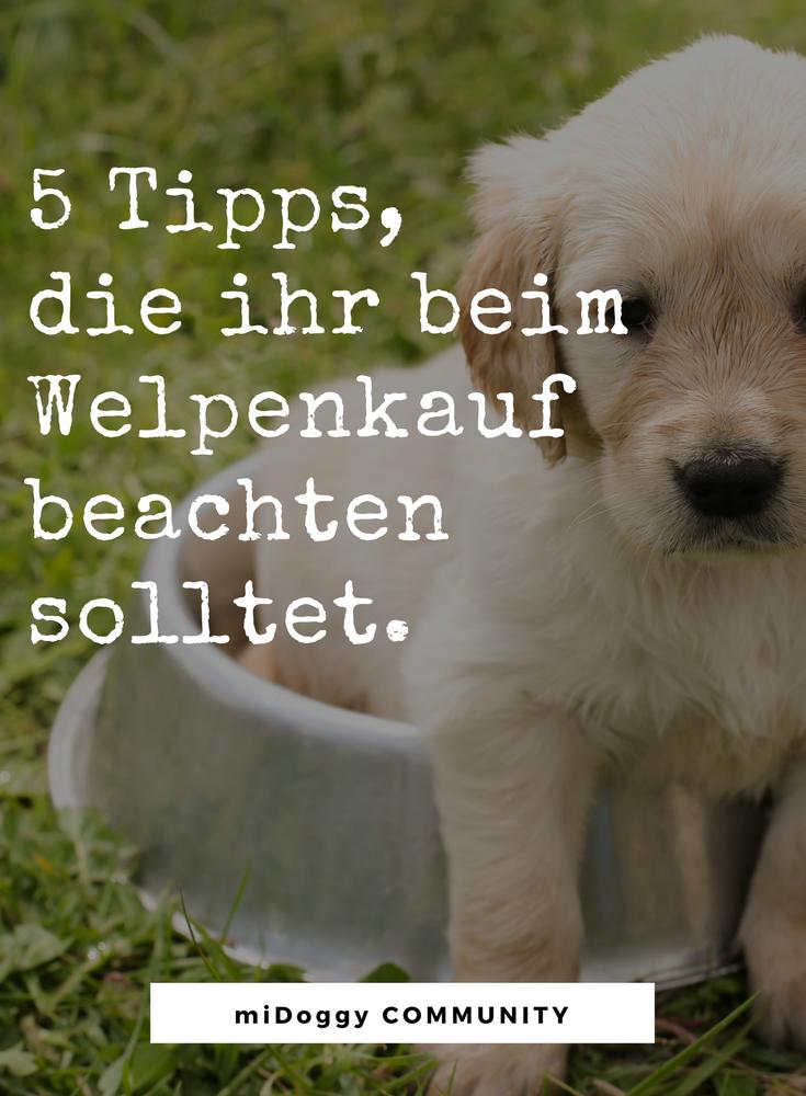 Hund Ideen Hunde Tipps Tricks Ideen Liebe