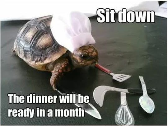 4e1321de264bc0f65614c93765c745eb i got a new slow cooker cooker, turtle and humor
