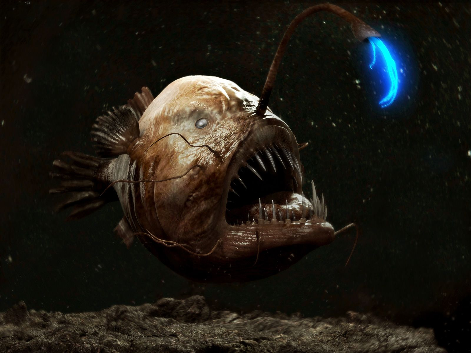 7 Of The Most Frighteningly Bizarre Ocean Creatures | Angler fish ... for Anglerfish Real Life  270bof