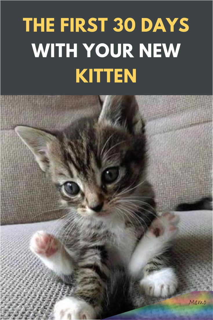 Apr 5 2019 Getting A New Kitten Is An Exciting Time You May Have Had A Kitten For A While Or You May Not Even Know Tha In 2020 Kitten Quotes Raising Kittens Kitten