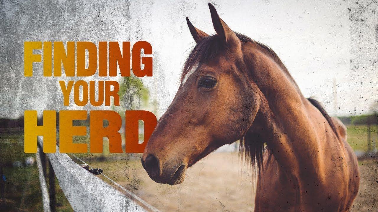 Finding Your Herd Herding Finding Yourself Animals
