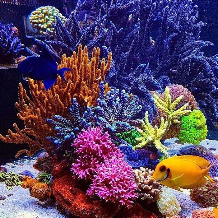 Resultado de imagem para peixe em esponja marinha