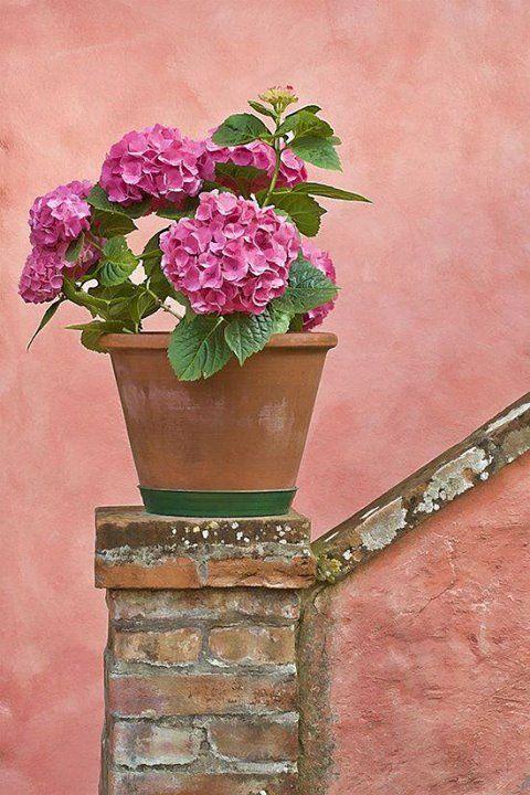 Terra cotta ... pink blooms ...