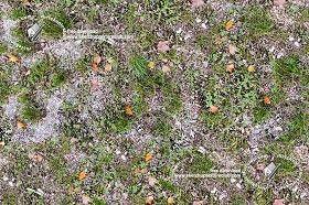 wild grass texture. Textures Texture Seamless | Wild Grass Texture 19525 -  NATURE ELEMENTS VEGETATION Wild