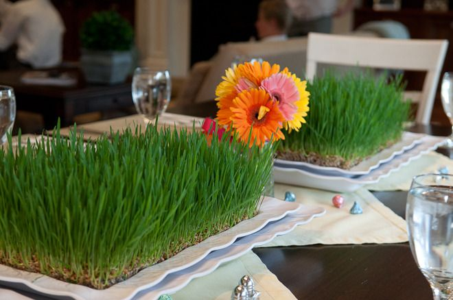 plant wheatgrass for center pieces