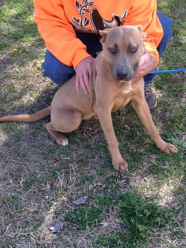 Urgent Dogs Of Columbus County Animal Shelter Nc Page Liked