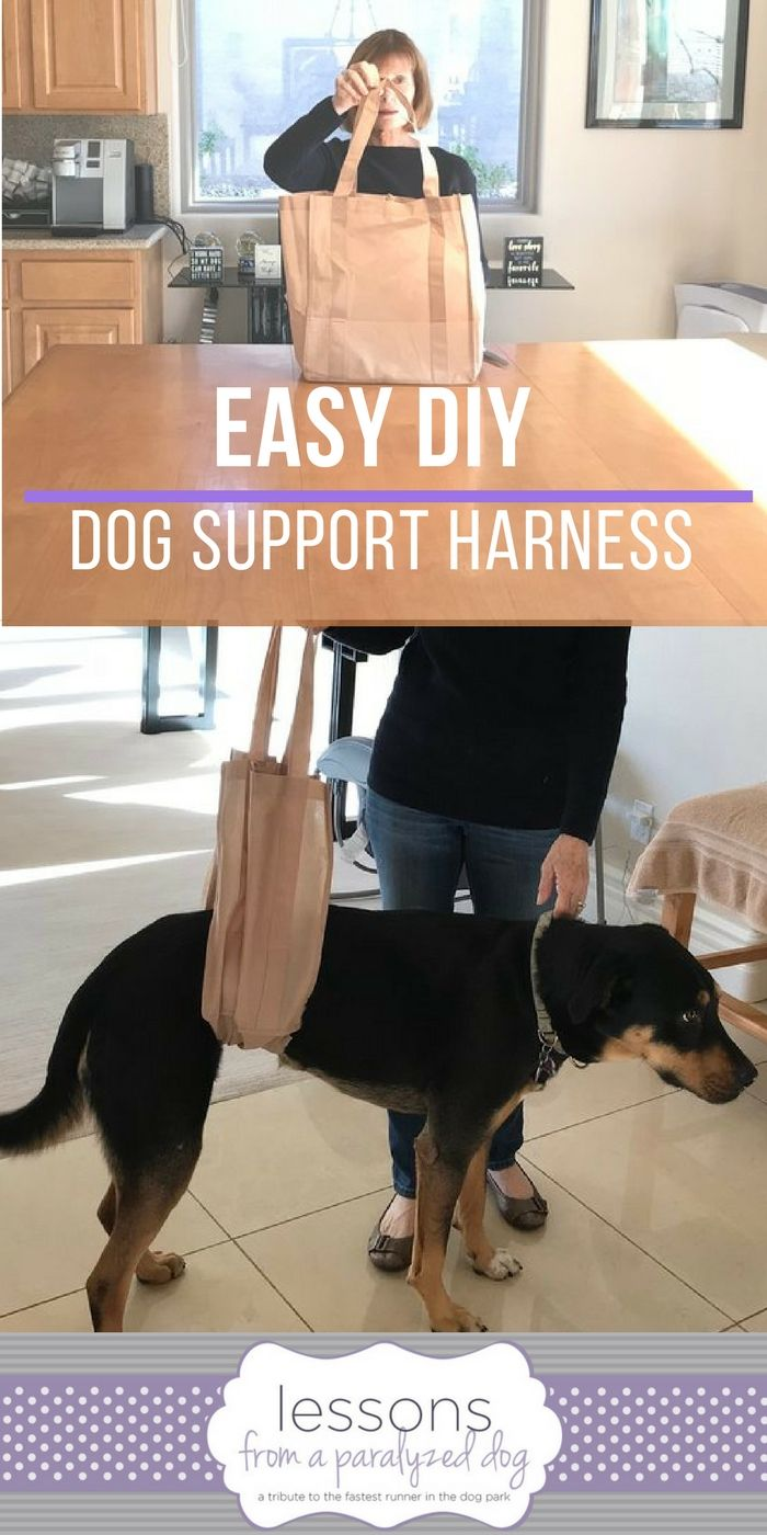 Easy Diy Grocery Bag Dog Support Harness Sling Paralyzed Dog
