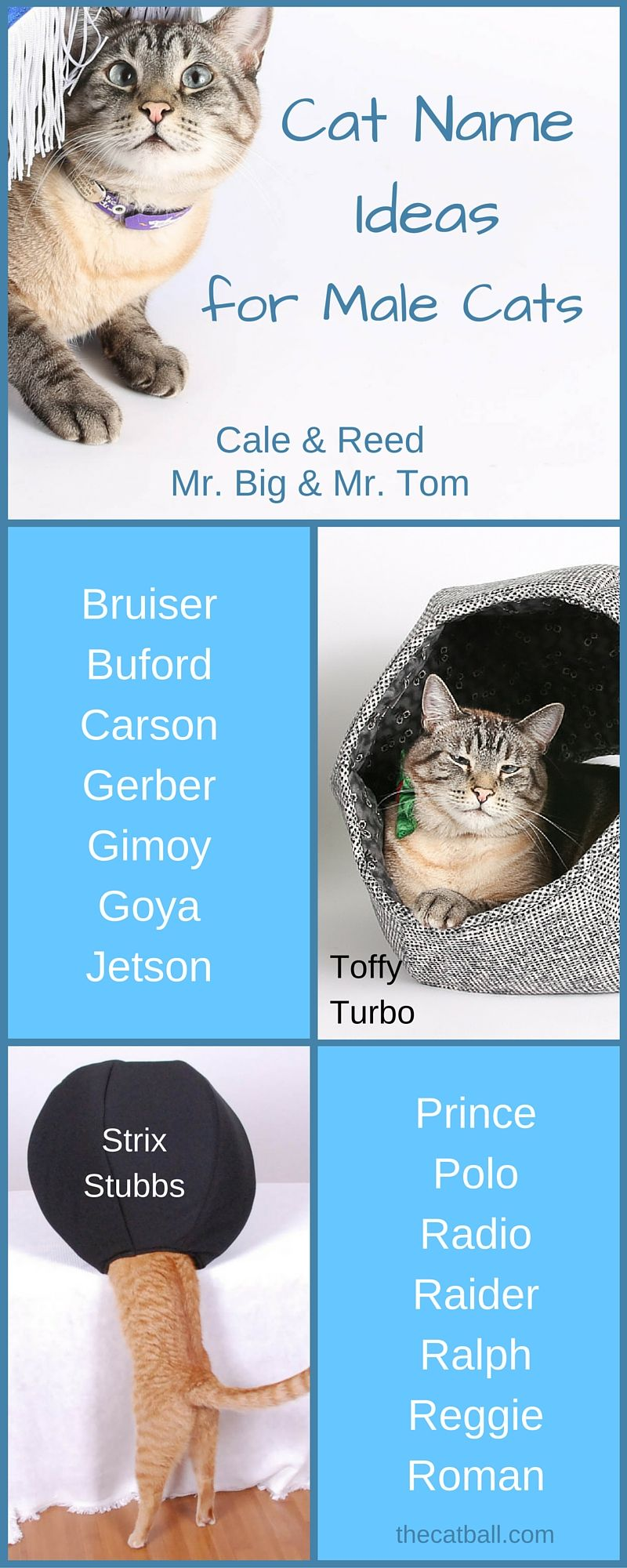 Cat Name Ideas for Male Cats Cat names, Kitten names