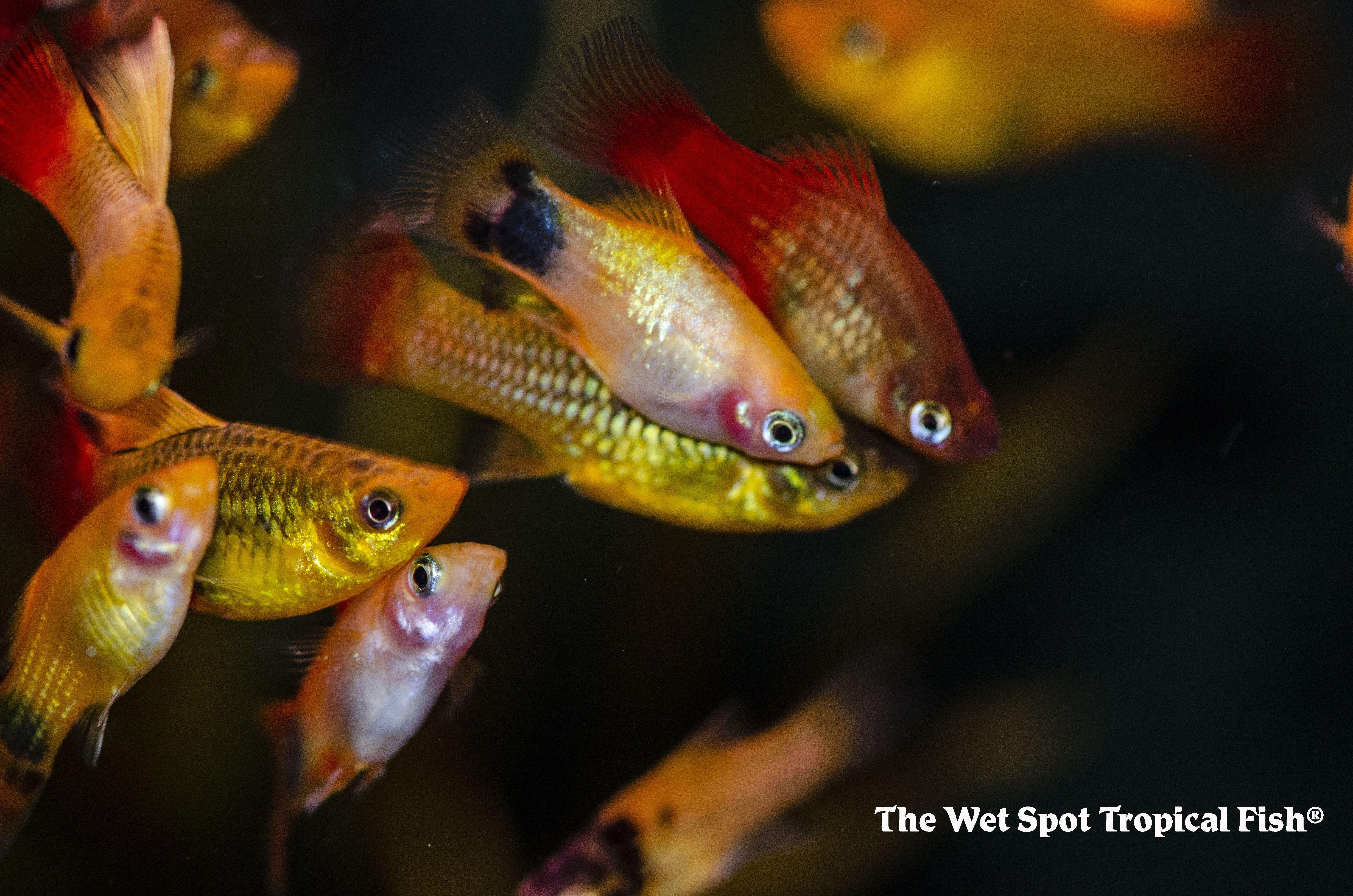 You Can T Buy Just One Tropical Fish Aquarium Maintenance Fish Pet