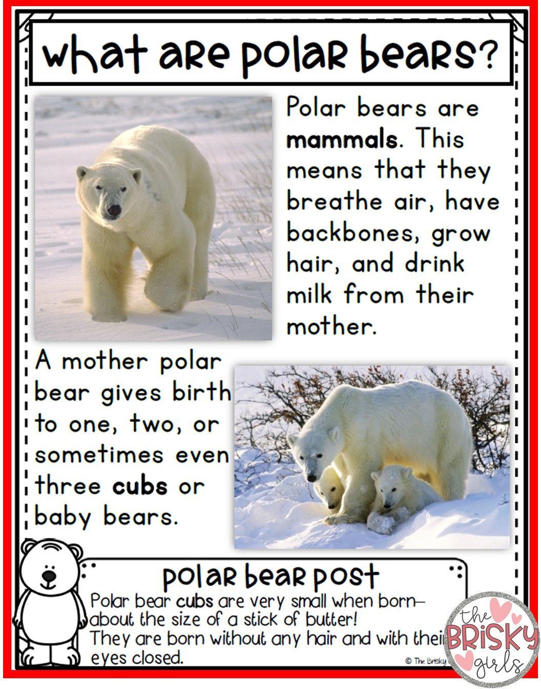 Polar Bears First Grade Polar Bears Reading Passages Polar Bear Close Reading Polar Bears Kindergarten [ 1344 x 1056 Pixel ]