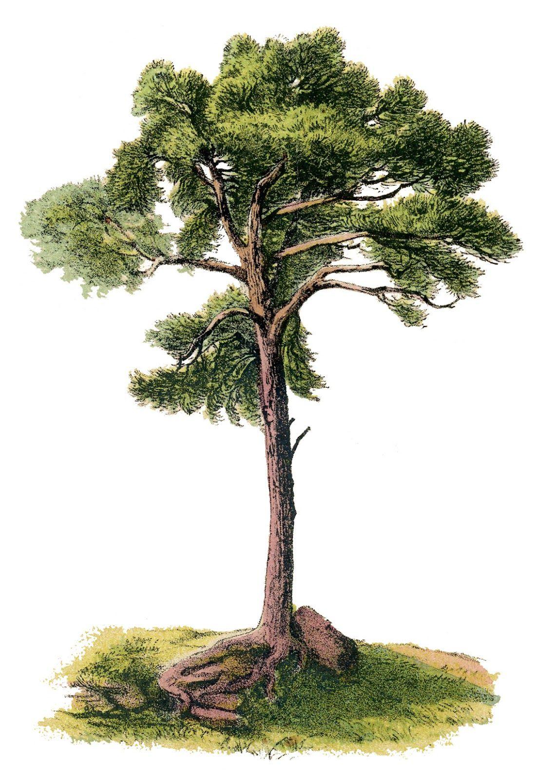 Vintage Image Gorgeous Tree Digital Design Tree Clipart Tree