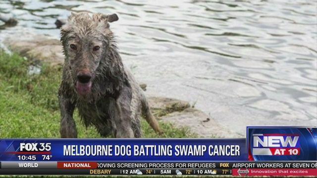 FOX 35 News at 10 p.m.