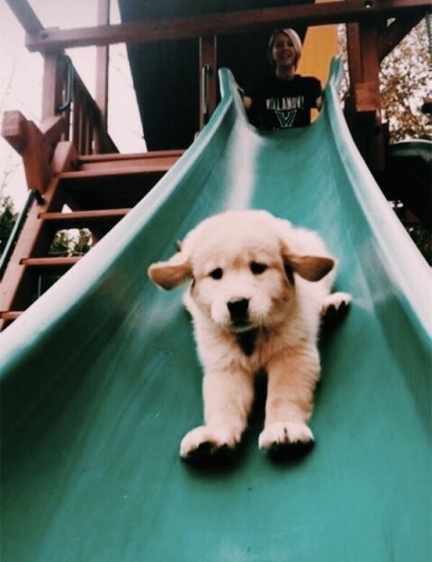 Sliding Puppy Funny Socute Fluffy Animals Aesthetic Cool
