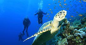 Scuba diving with the turtles