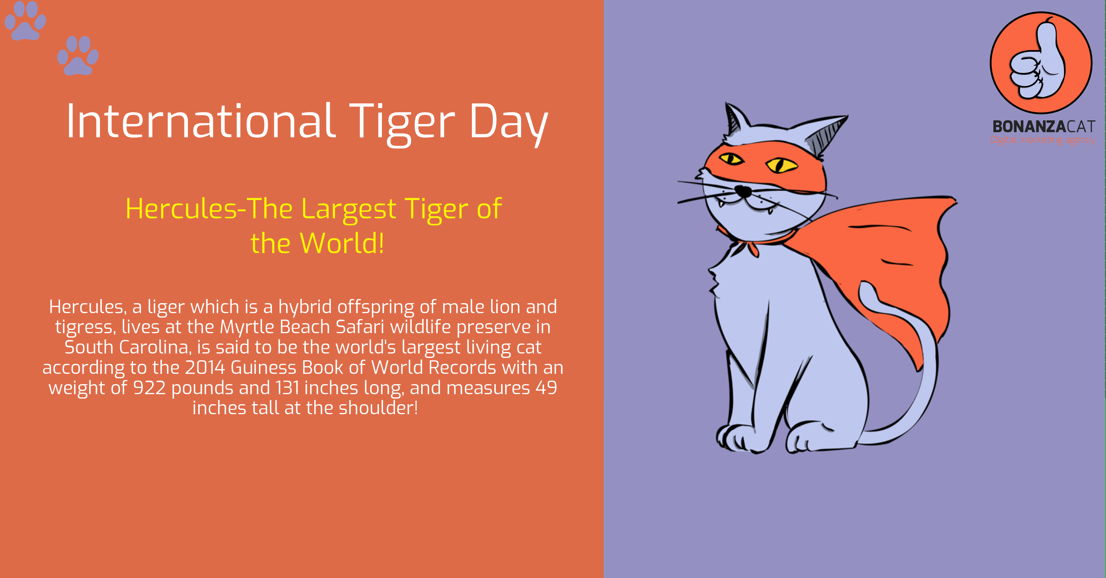 International Tiger Day Digital Marketing Digital Marketing Agency Digital Marketing Solutions