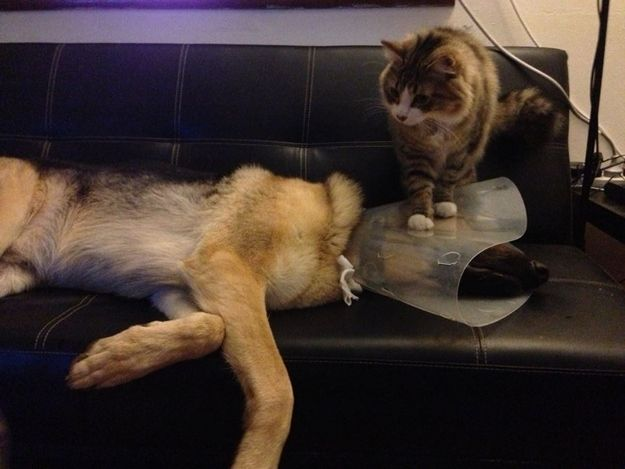 This dog who was degraded by the cone of shame AND a cat. | 28 Dogs Having A Way Worse Day Than You