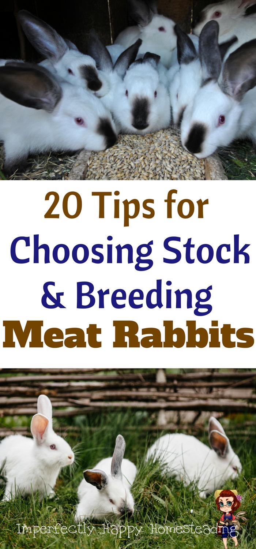 20 Tips for Choosing Stock & Breeding Meat Rabbits for your homestead or  backyard farm.   Meat rabbits, Rabbit farm, Rabbit