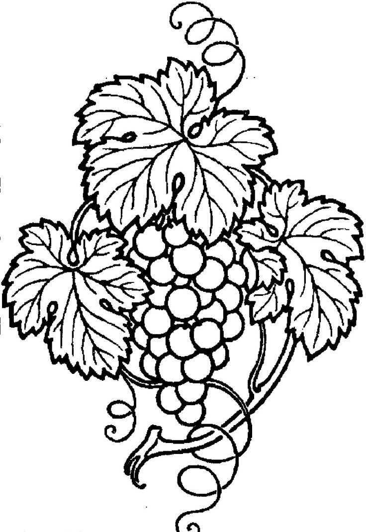 Download and Print Grapes With Leaves And Branch Coloring Pages ...