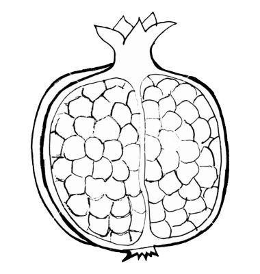 Pomegranate Vector Image On S Izobrazheniyami Raskraski Shablony