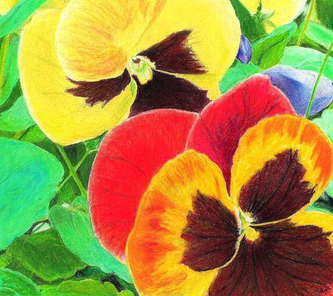 colored pencil flowers - Google Search   Color pencil ...  colored pencil ...