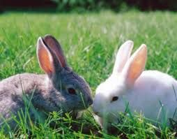 Risultati immagini per animali erbivori