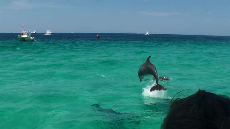 Dolphins everywhere in Destin! :)