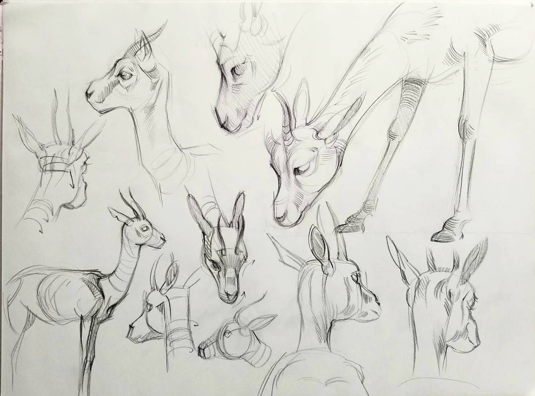 Some zoo studies from the la zoo pencildrawing zoodrawing zoosketch animaldrawing