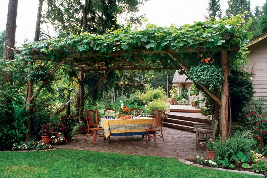 So pretty relaxing ... Grow grapevines on top a pergola. An edible landscape is a perfect garden design option. Edible landscaping adds beauty to your space and gives you healthy, nutritious local food.
