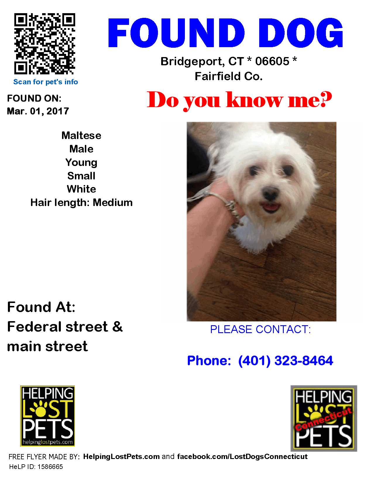 Lost Dogs Connecticut Published By Jessica Goddard Like This Page 4 Hrs Found Dog Bridgeport Ct Maltese Mar 01 2017 Losing A Dog Dogs Bridgeport