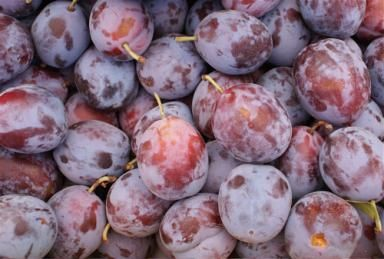 See How Easy It Is To Freeze And Store Plums Plum Recipes Freezing Plums Plum Varieties
