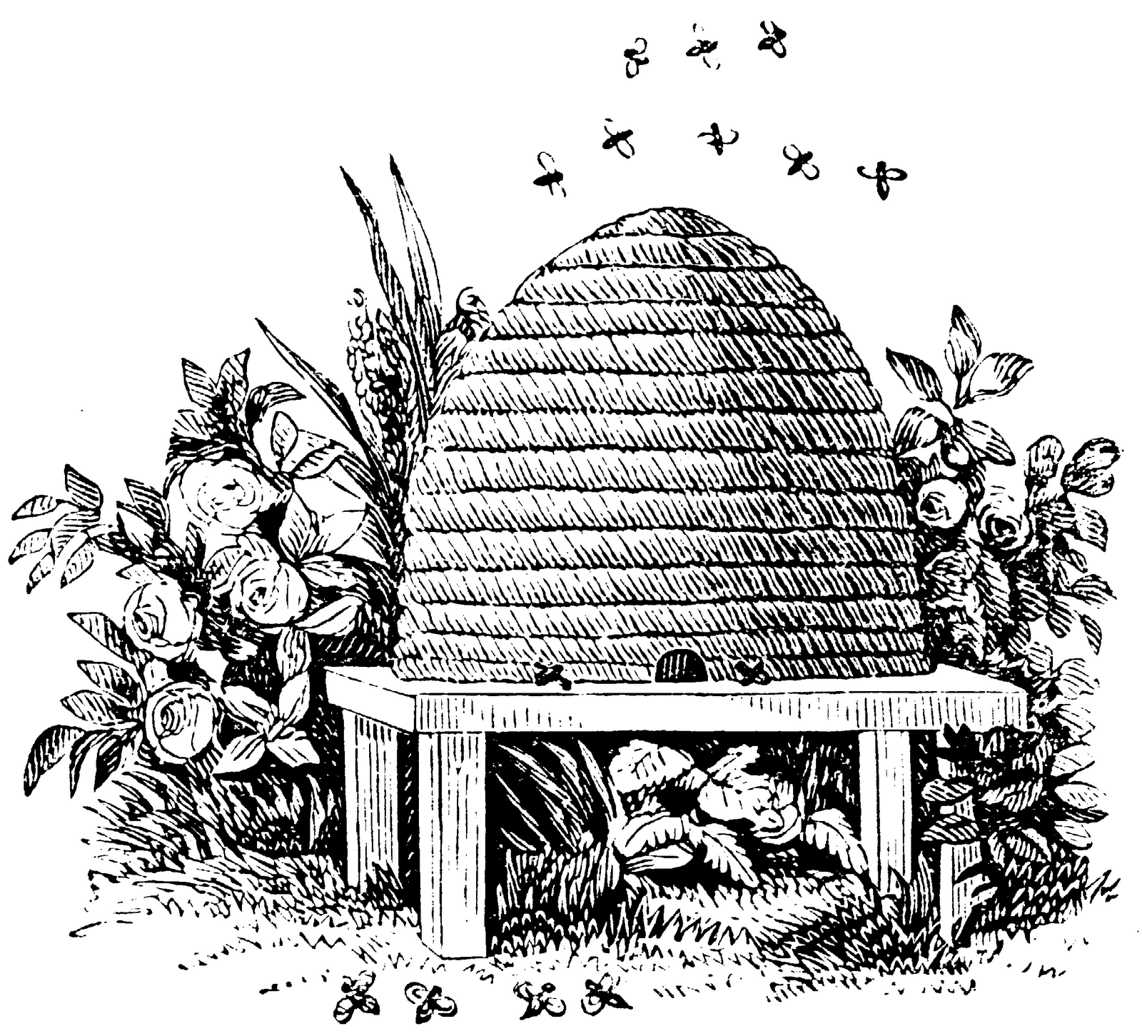 Beehive Clipart Black And White Free Images Image