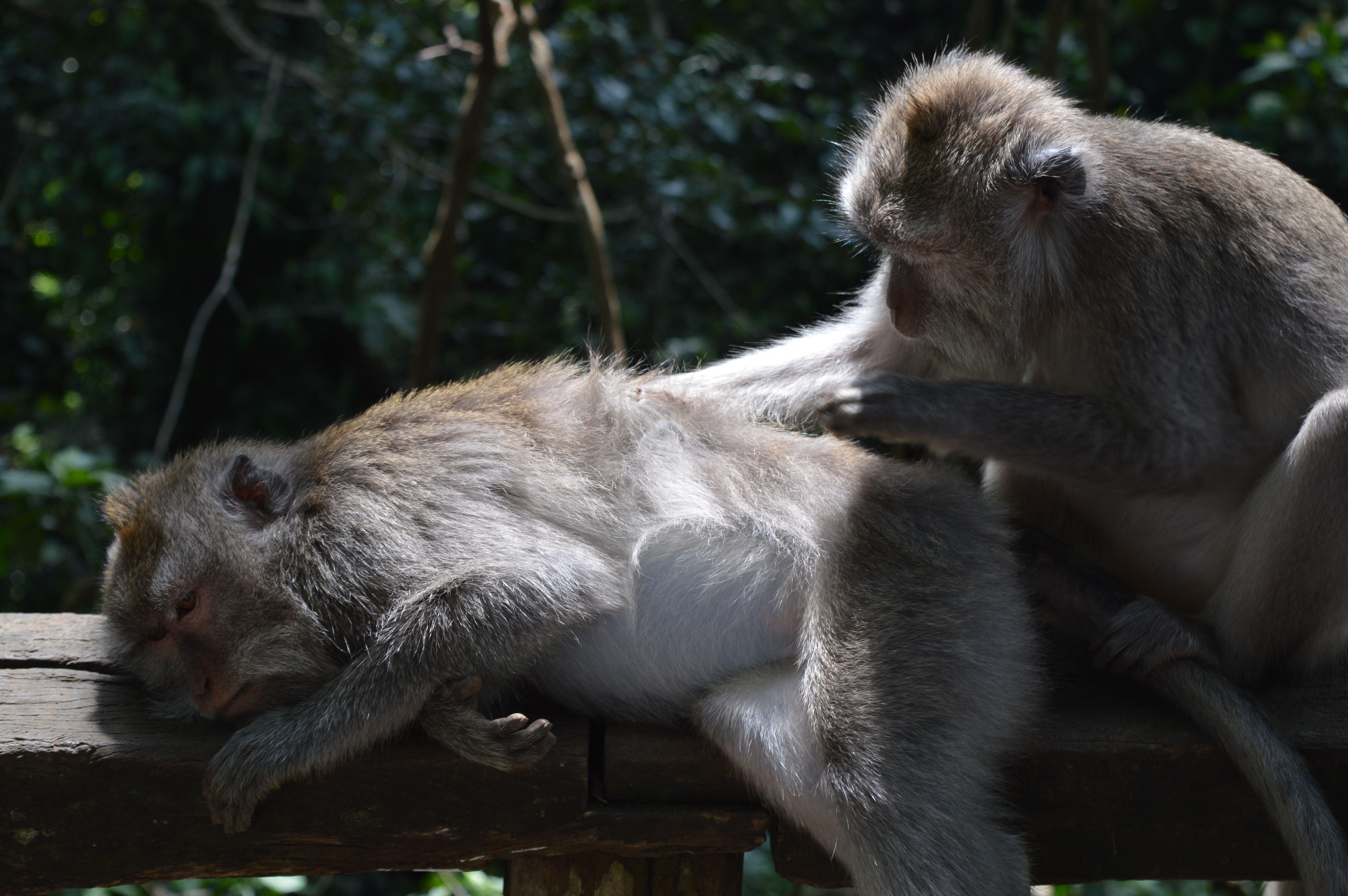 El Bosque de los Monos en Ubud