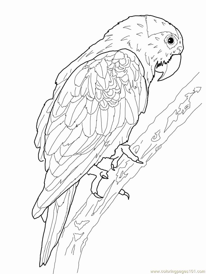 Bird Coloring Book For Adults Elegant Printable Parrot Coloring Pages Coloring Pages Bird Coloring Pages Coloring Book Art Animal Coloring Pages