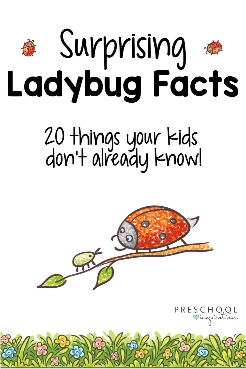 Ladybug Facts for Kids - Preschool Inspirations in 2020 ...