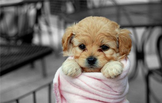 All Bundled Up Cute Animals Puppy Dog Pictures Baby Animals