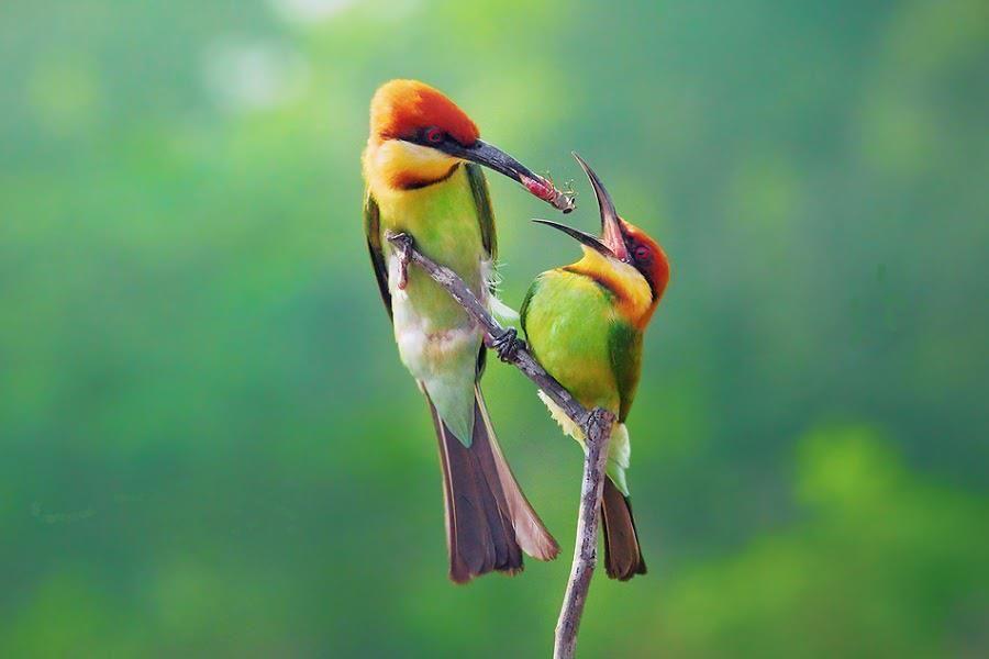 Save Our Green(Birds) | Bird, Mother bird, Bird feeders - photo#3