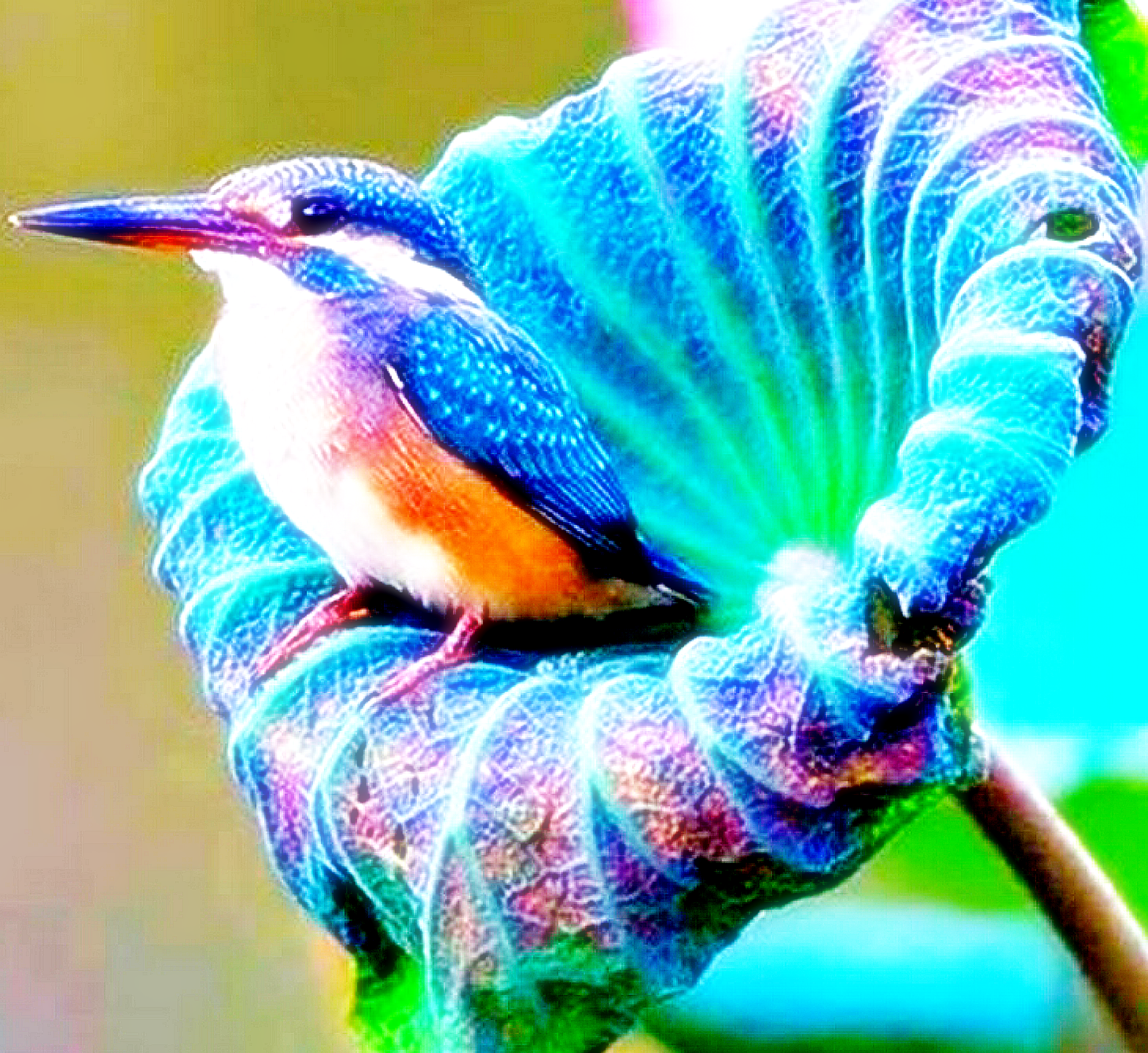 A Beautiful Humming Bird Not To Mention A Really Pretty Flower