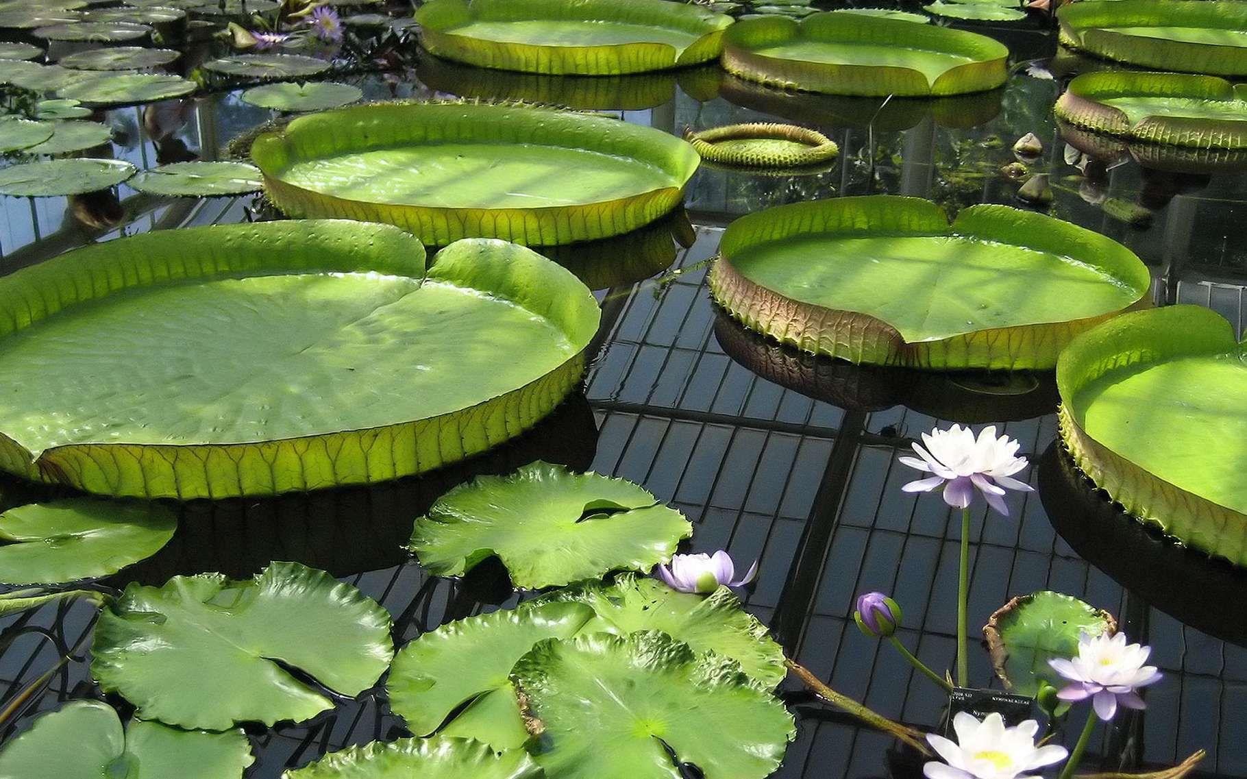 Bassin Préformé Hors Sol maintenir une eau de bassin limpide et pure | jardin