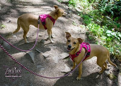 Let S Go Hiking With The Hurtta Active Harness Go Hiking Dog