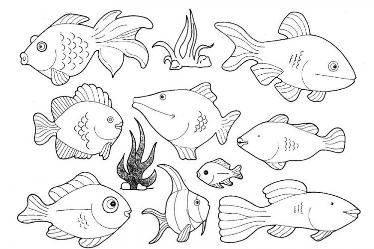 Freshwater Fish Coloring Pages. river animal coloring pages Sea Creatures Coloring Pages  Home Kids