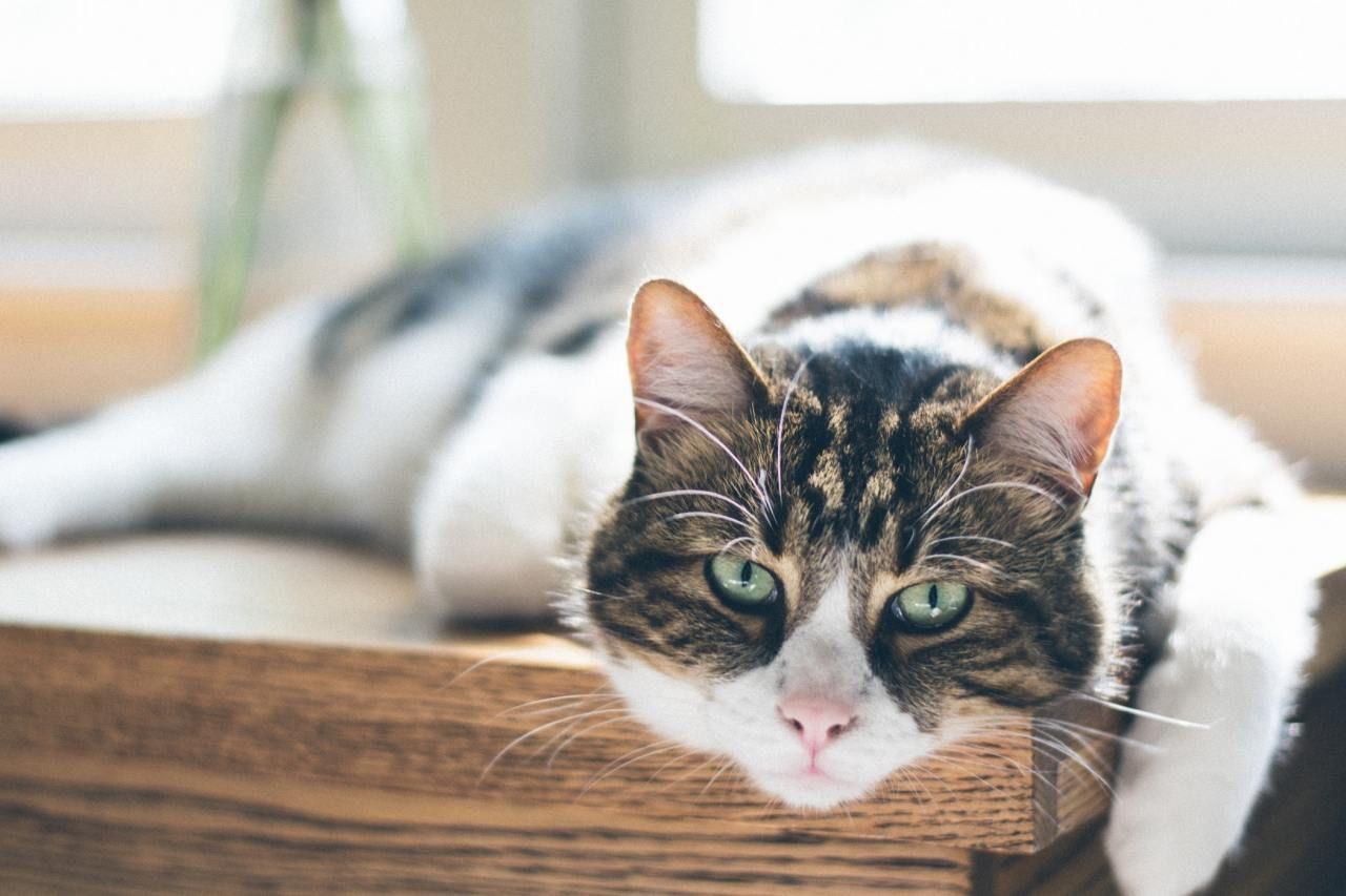 Pin von Dragonh3art auf cats Haustiere, Katzen futter, Tiere