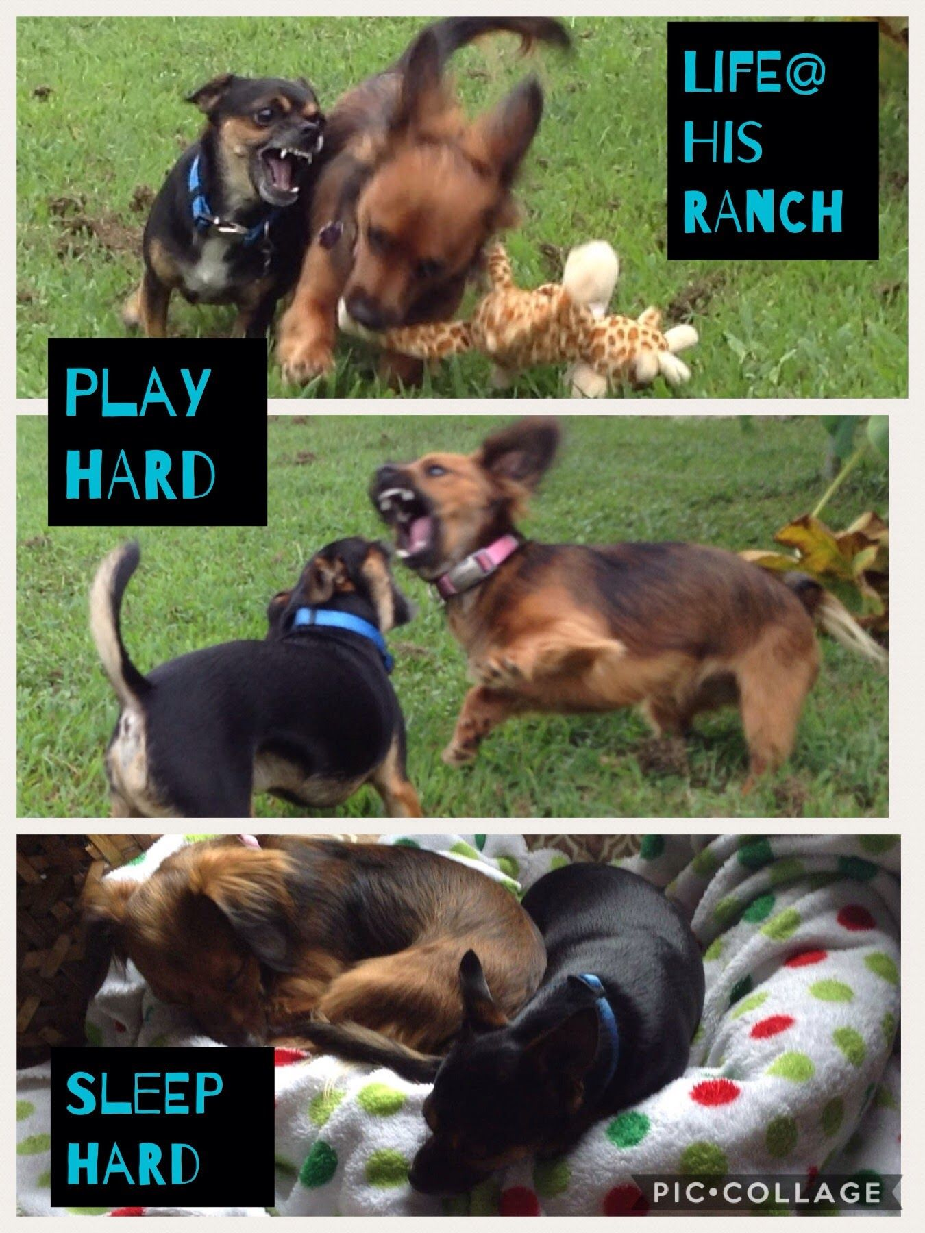 Pin By Sharon Rios On His Ranch Doggie Daycare Dog Training Near