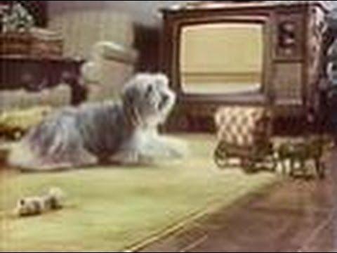 Chuck Wagon Chase The Chuckwagon Commercial 1976 Youtube