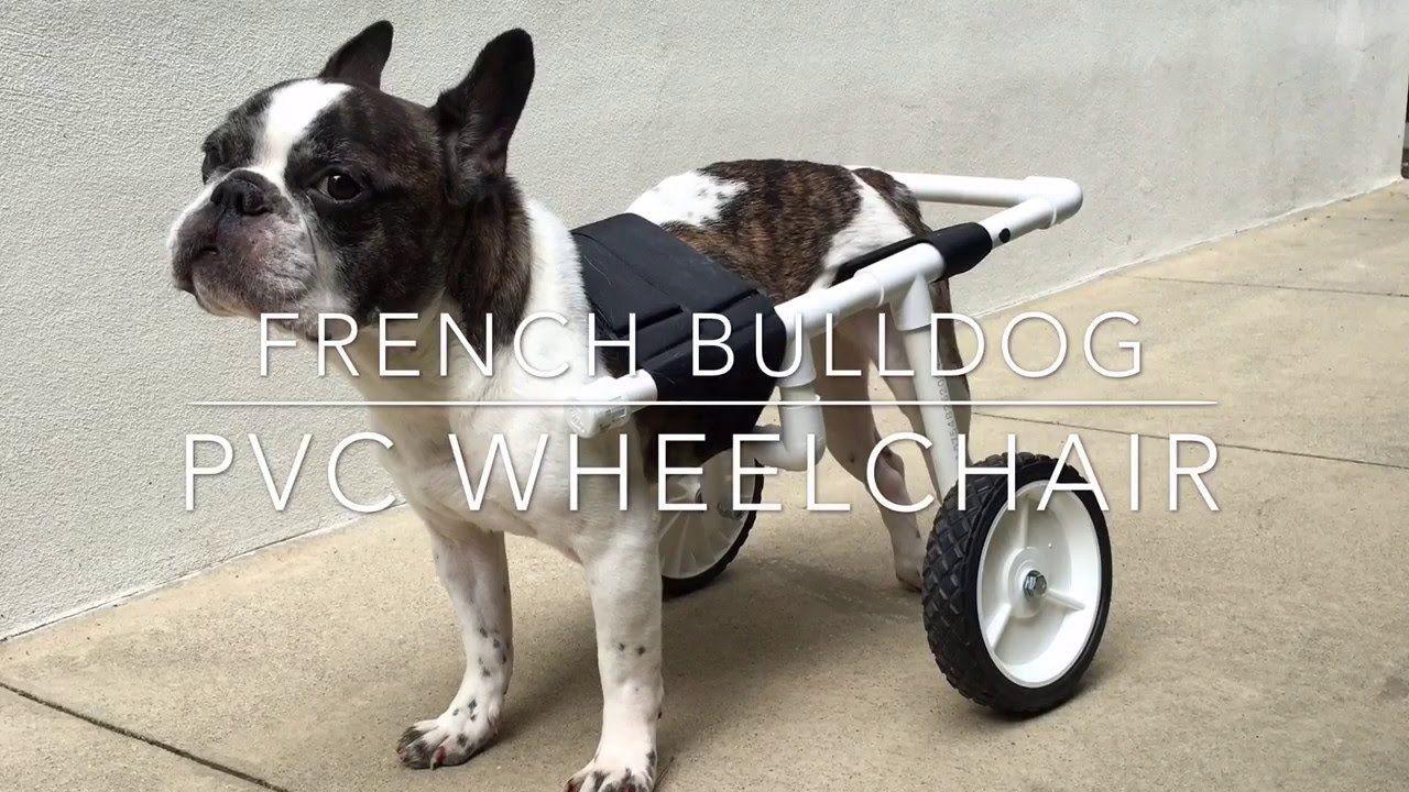 Diy french bulldog pvc dog wheelchair dog wheelchair