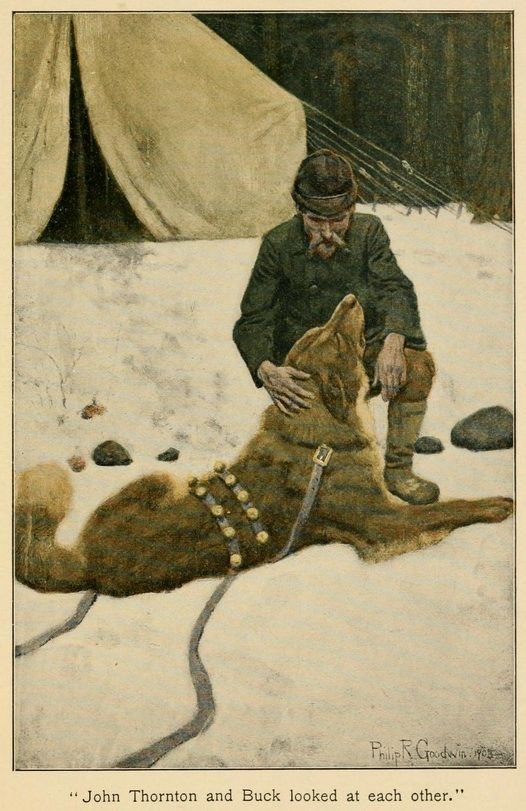 The Call Of The Wild Cover Designs Tattered But Still Lovely Librarything Call Of The Wild Wild Jack London