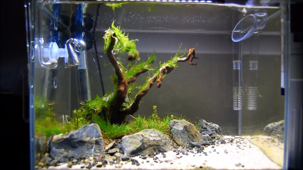 That Tree By The Beach Nano Aquascape Update With Images