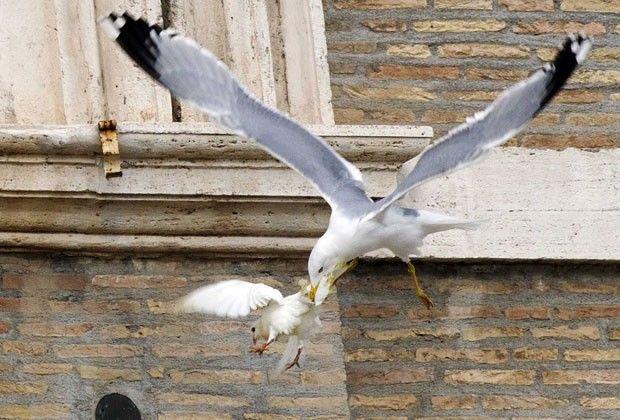 Gaivota ataca pomba solta pelo Papa Francisco durante o Ângelus deste domingo (26) (Foto: Alessandro Bianchi/Reuters)