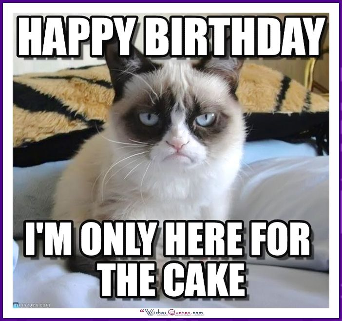 Birthday Cat Meme Generator: Happy Birthday Memes With Funny Cats, Dogs And Cute