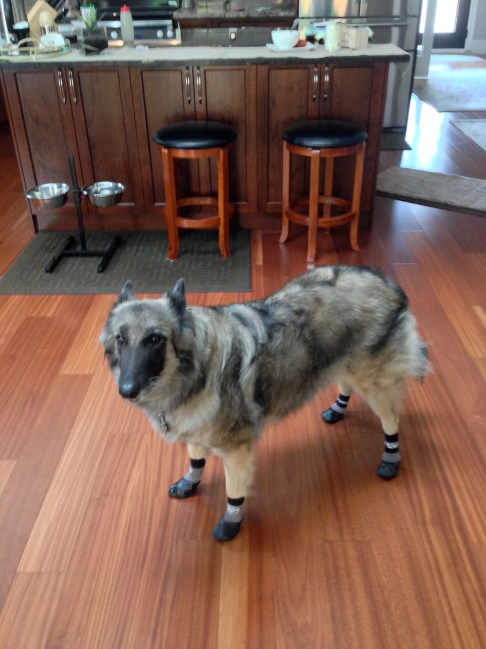 Dog Socks Hardwood Floors Flooring Ideas And Inspiration