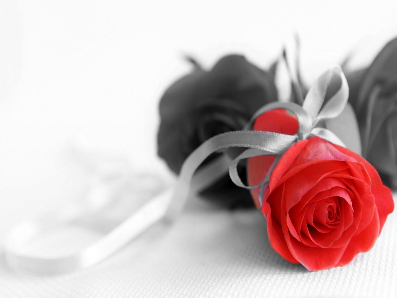 Flowers Black and white with Color Pictures   ❤❤❤Color Splash 2 ...